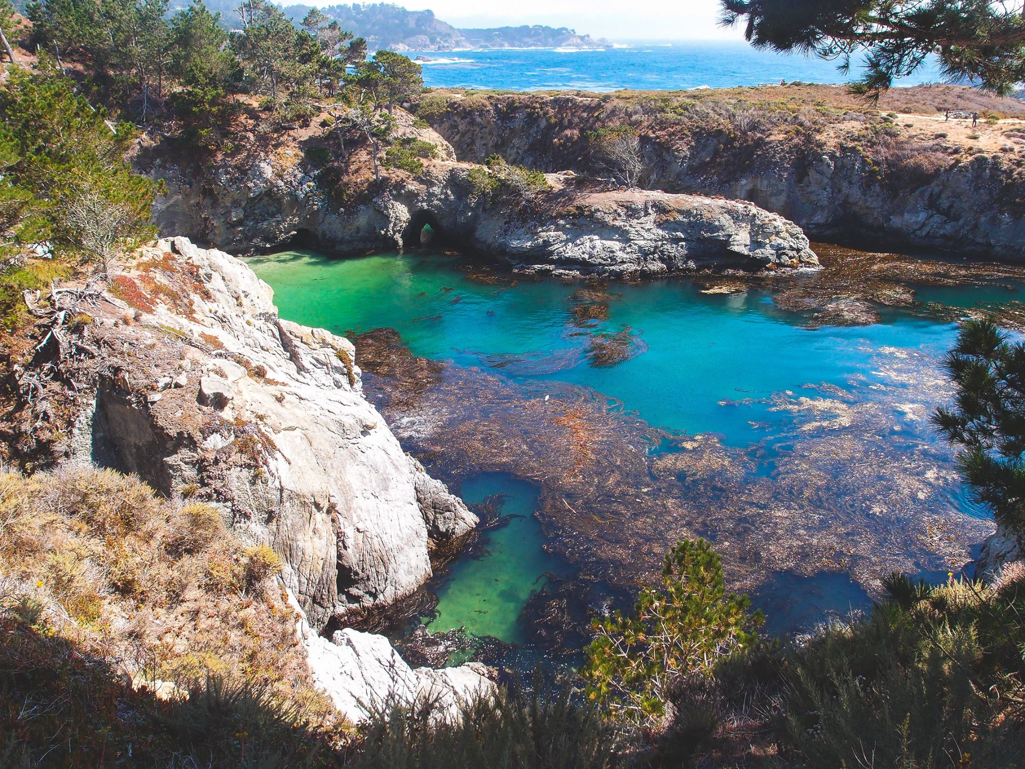Point Lobos Adventure