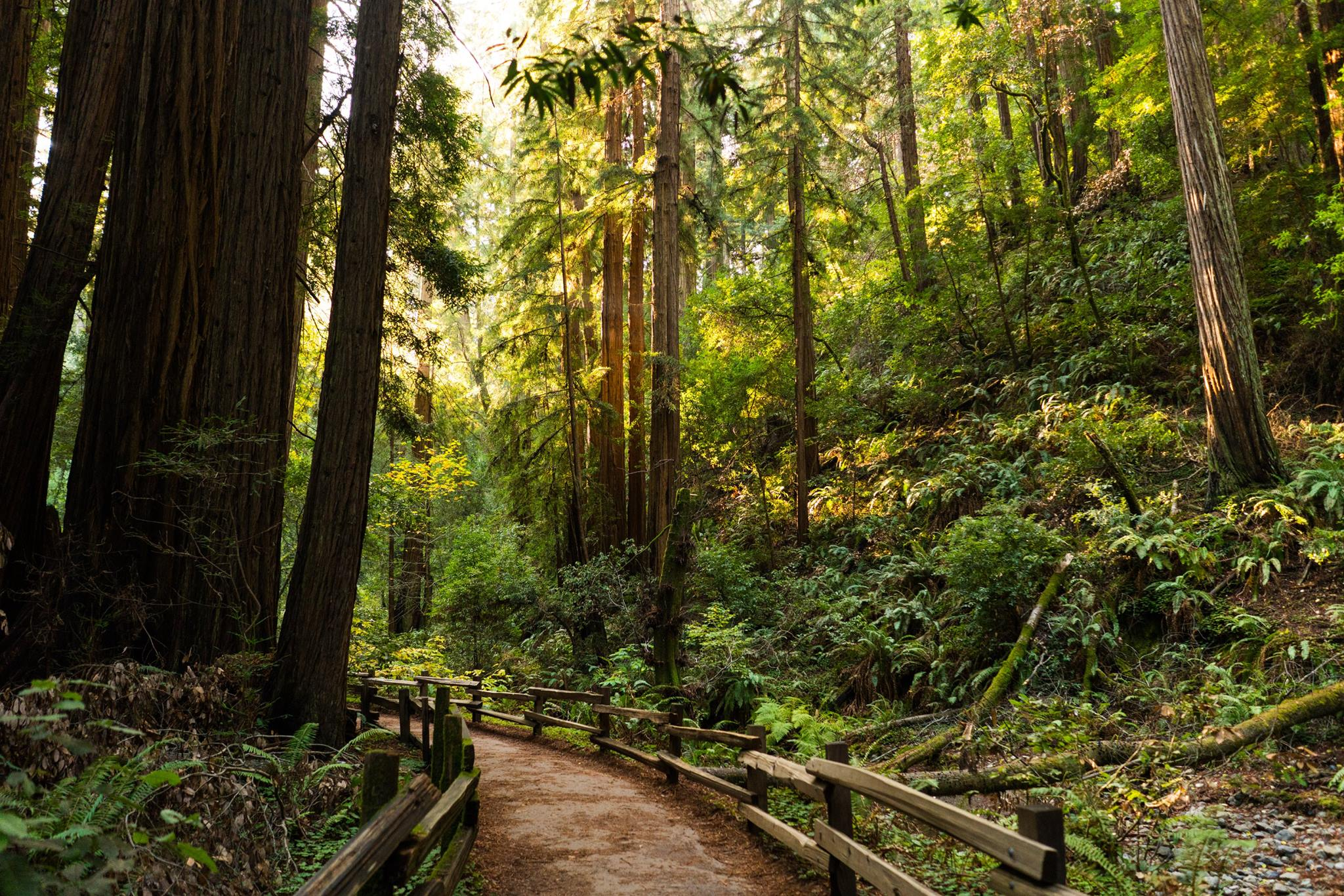 Muir Woods or Enchanted Forest?!